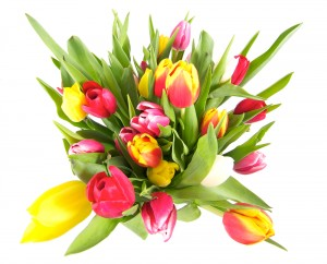 Delivery Tulips Flowers